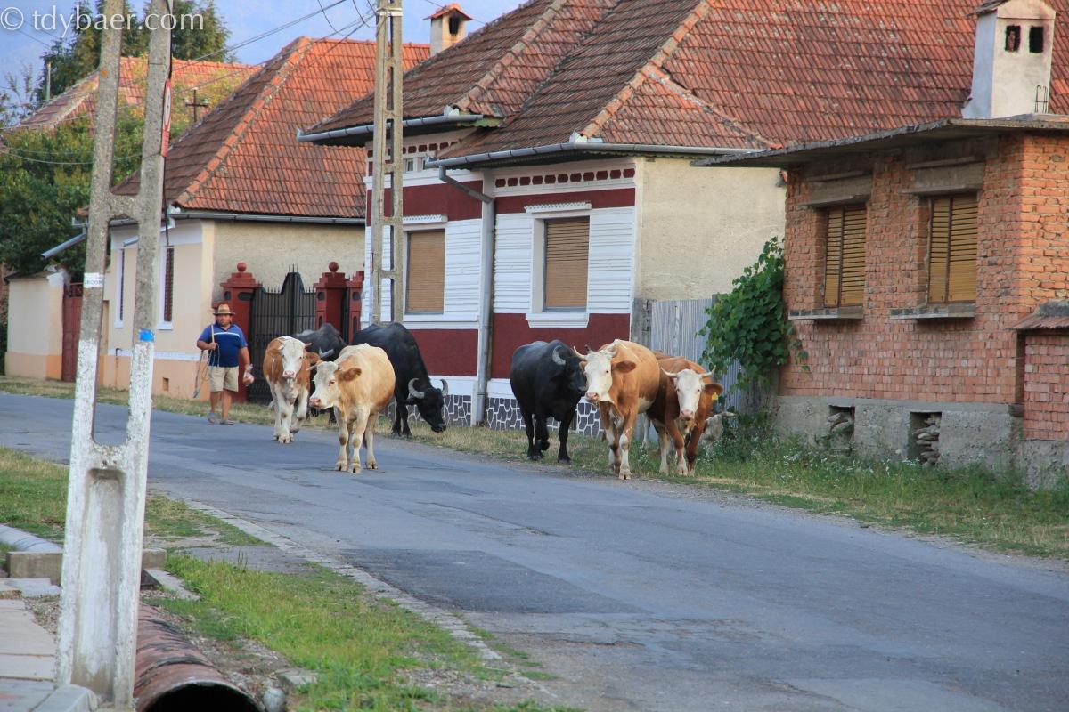 29.07.2012 – Auf in die Karpaten, viele Storchennester und Wiedersehen mit der alten Heimat