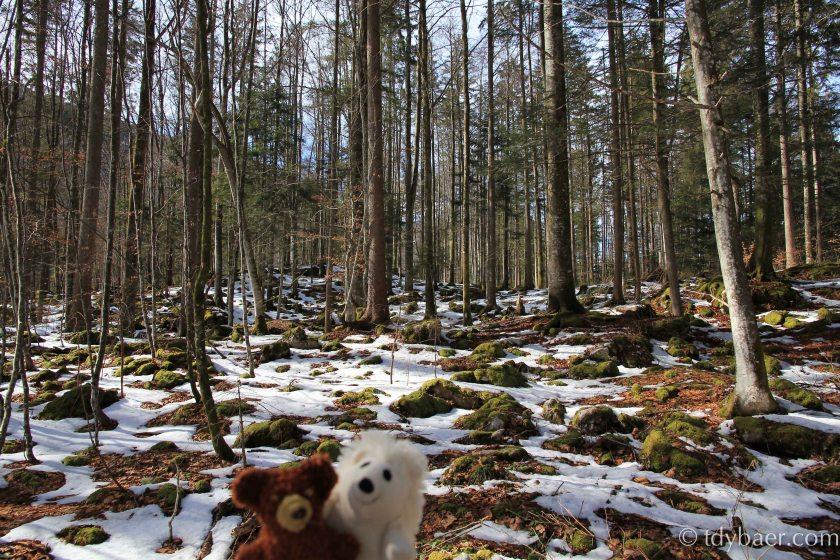 Schneetupfer im Wald